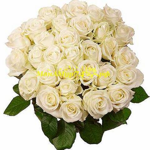 Букет из 35 белых роз