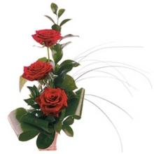 Букет из 3 роз!