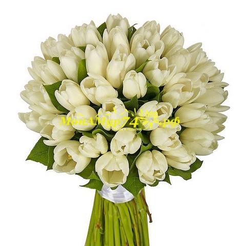 Букет из белых тюльпанов 51 шт.